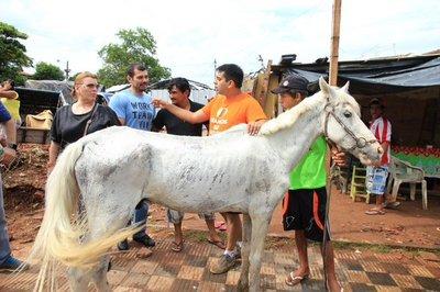 Crearán albergue transitorio para animales en situación de riesgo