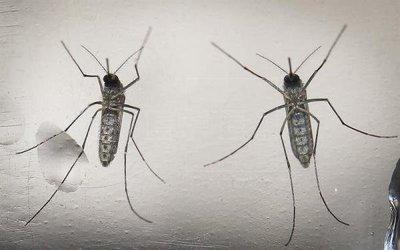 Bruselas destina 10 millones de euros a la investigación sobre el virus del zika