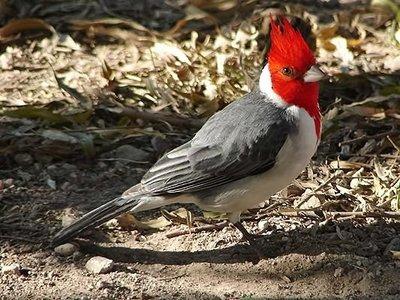 Brasil: Paraguayo cae con aves de contrabando