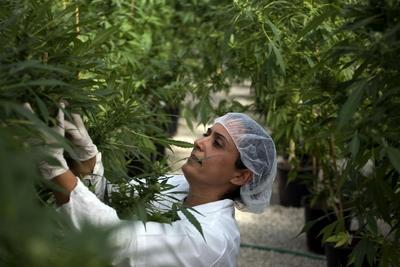Israel toma en serio el cannabis