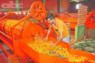 Zanahoria para comercialización