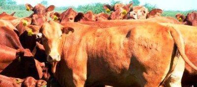 Guía Electrónica (E- Guía) para bovinos y bubalinos