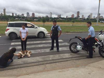 Conductor desalmado atropella a dos perros