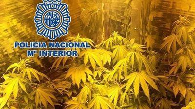 Detenidos por cultivar marihuana y usar música para estimular crecimiento