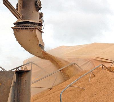 Iragro: Caída de precio de la soja y evasión inciden en baja recaudación