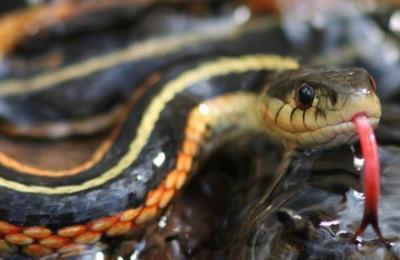 ¡No lo podrás creer! Esta serpiente encontrada en Brasil tiene 4 patas y no para desplazarse