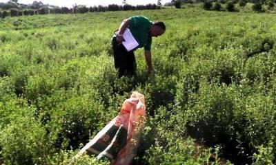 Extranjeros pretenden cultivar 3.000 hectáreas de stevia en el país