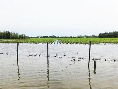 Inundaciones en Argentina presionaron valores de la soja