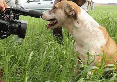 Leishmaniasis: Piden a propietarios ser responsables con la tenencia de mascotas
