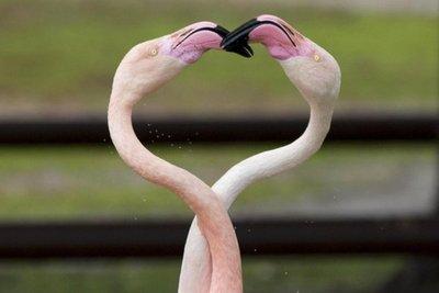 La celebración de San Valentín por el mundo