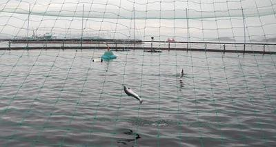 La acuicultura amenaza seguridad alimentaria