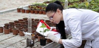 Egipto otorga becas de postgrado para el área de ciencias agrícolas