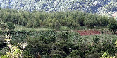 FAO ELOGIA PROYECTO DE REFORESTACIÓN DE PARAGUAY