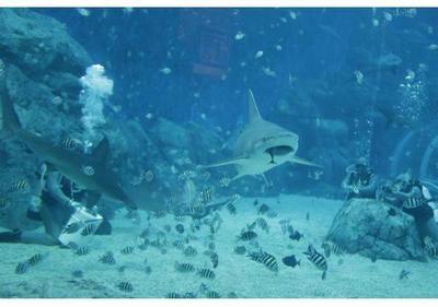 EE.UU: Censan tiburones y rayas