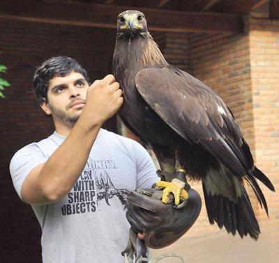 Águila real sobrevuela Paraguay