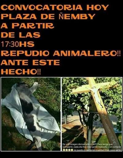 #Ñemby: Anuncian inédita manifestación por la muerte de un gato
