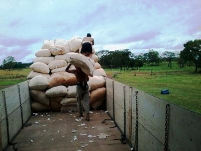 Comenzó con éxito la zafra de algodón en el departamento de Itapúa
