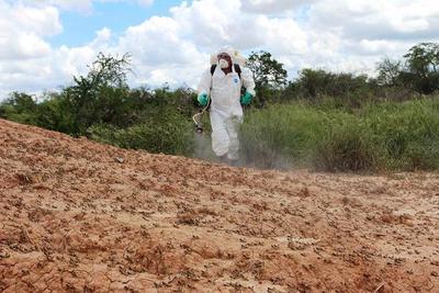 La extinción de la plaga de langostas no es fácil, afirman