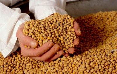 El eterno tira y afloja en el intercambio mundial de semillas