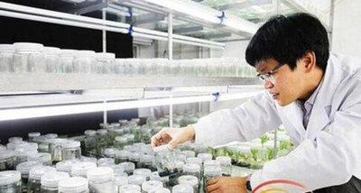 Invento chino: Mangos espaciales resistentes a plagas