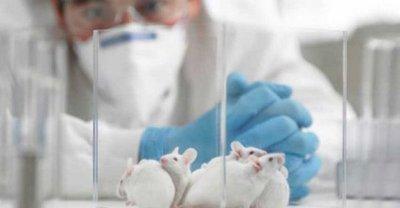 Ratones con párkinson recobran movilidad