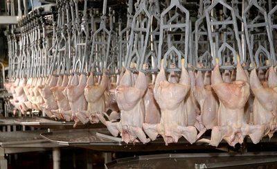 En Yhú invierten 9 millones de dólares en un frigorífico que procesará pollos