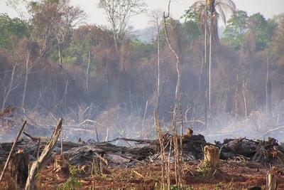 Alarmante, deforestación en el Chaco llega a las 642 Has al día