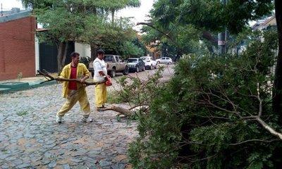 Casi 30 árboles caídos por el temporal