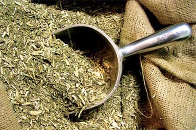 Exponen avances científicos sobre yerba mate en Brasil