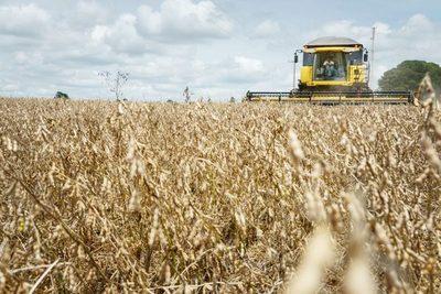 Lluvias podrían bajar rinde de cosecha de soja