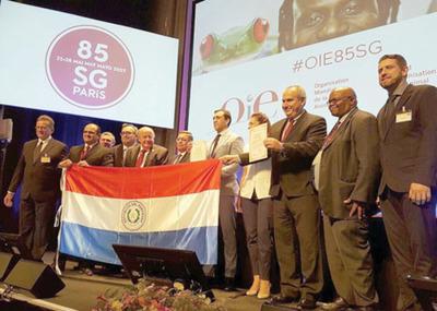 La OIE certifica a Paraguay como   libre de peste porcina
