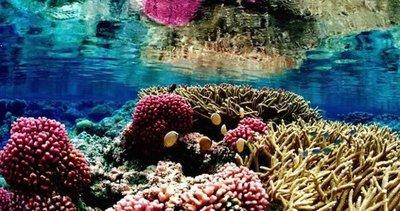 Corales predicen erupciones volcánicas