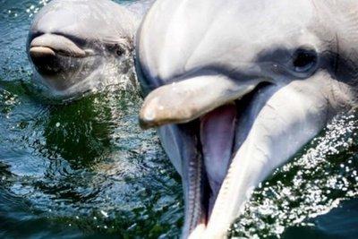 Nace un delfín en un zoológico de Holanda