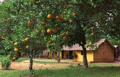 Con sabor a mandarina