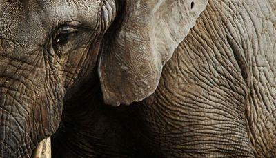 Un elefante 'asesino' siembra el pánico en India
