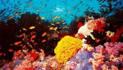Científicos concluyen investigación en arrecifes de la isla