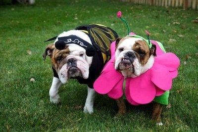 Organizan Bulldog Fest en el Botánico