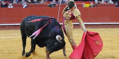 España quiere prohibir matanza de toros