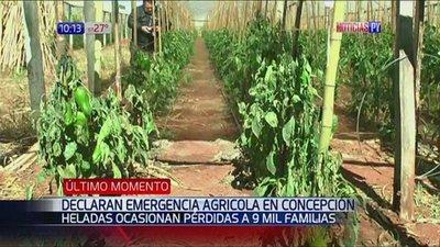 Concepción: Declaran emergencia agrícola tras intensas heladas