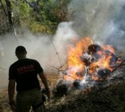 Incautan y queman cerca de 5 toneladas de marihuana
