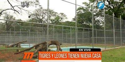 Felinos del Zoológico inauguran nueva casa