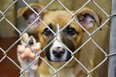 Habrá cárcel por el maltrato  animal