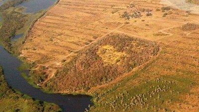 Senado pedirá un informe sobre Ley Forestal