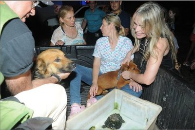 Rescatan perros y tortuga de un coreano
