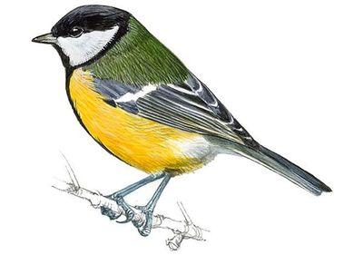 ¿Pájaros con picos más largos para acceder a comederos de jardín?
