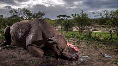 La desoladora fotografía de naturaleza, ganadora del 2017