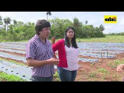 Cultivo de tomate, otra opción para los emprendedores