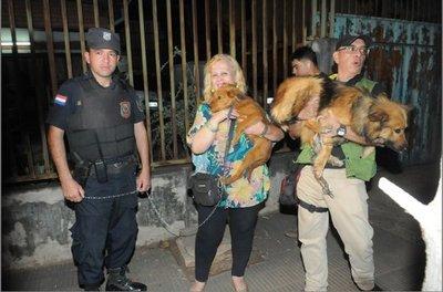 Informe médico revela que animales no eran maltratados