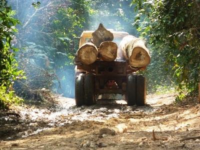 Políticos también integran el esquema del tráfico de rollos en zona de Itakyry