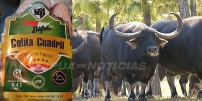 MENOS CALORÍAS Y COLESTEROL, CARNE DE BÚFALO SE ABRE COMO OPCIÓN EN PARAGUAY